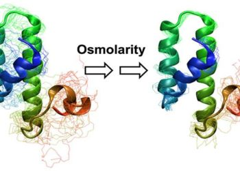 Structural changes in the molecular sensor in response to changing osmolarity conditions (salt concentration)